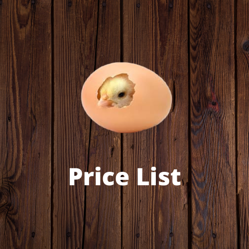 Clickable image to be taken to the Frey's price list. Image of a chick breaking out of an egg.